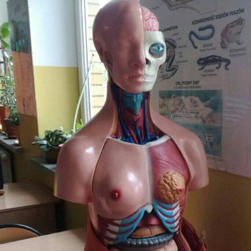 model budowy człowieka